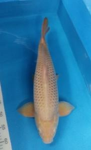 318-ii aquarium-balikpapan-kkc-kediri-kawarimono-55